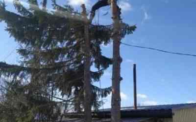Спил и вырубка деревьев - Малоярославец, цены, предложения специалистов